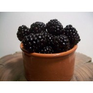Organic Blackberry Plants
