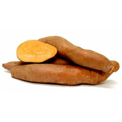 Organic Sweet Potato Slips